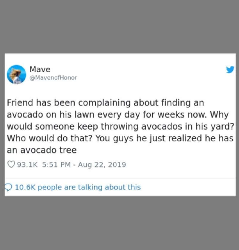 The avocados keep coming